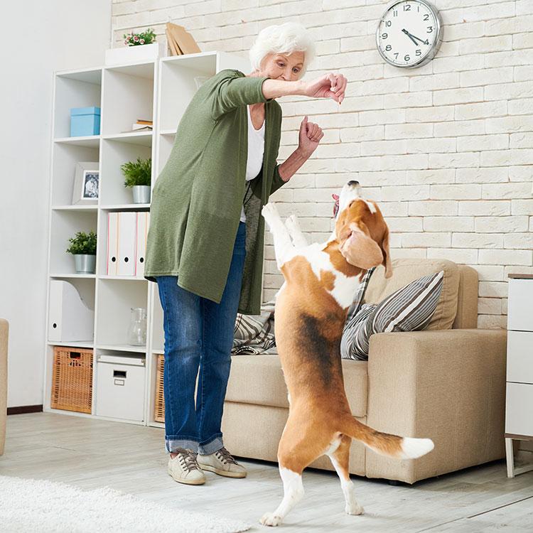 Los animales de compañía ayudan a estimular la actividad física