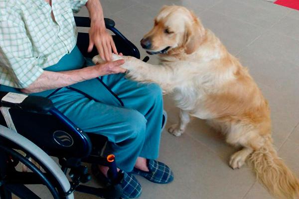 animales para nuestros mayores