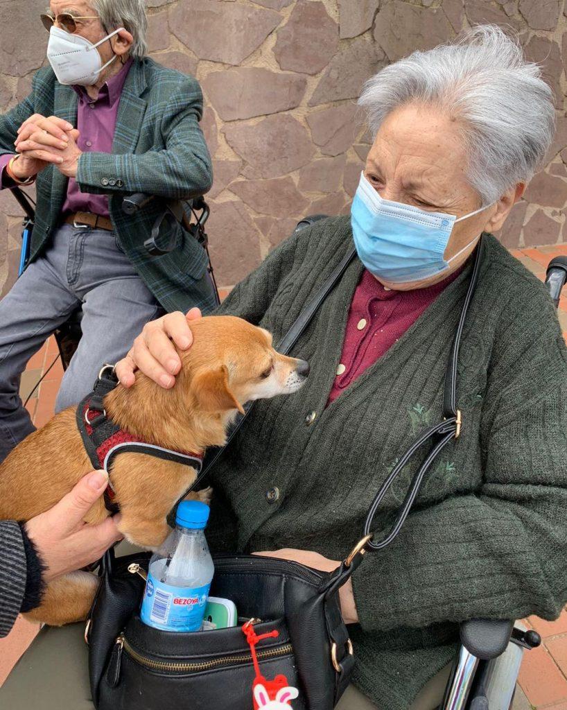 visita de perros en ciudad jardín