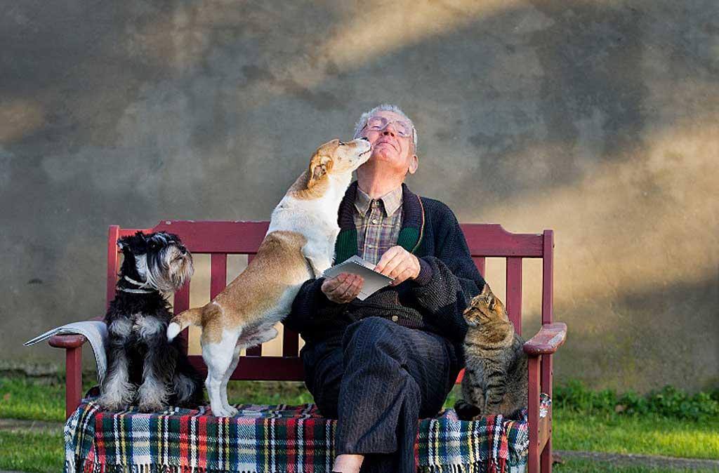 mejores razas de perros para personas mayores